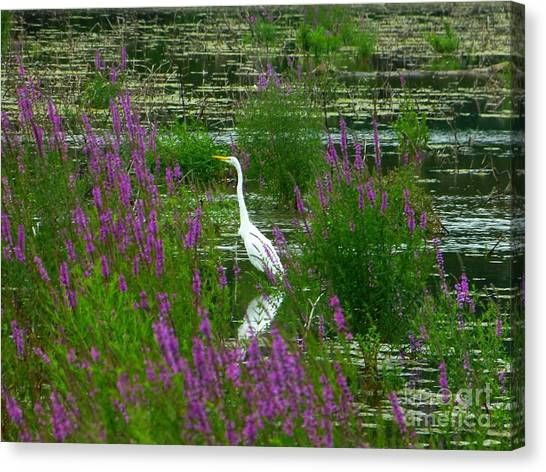 Great Egret - Purple Canvas Print
