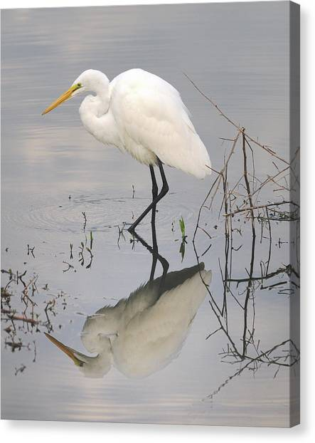 Great Egret Reflected Canvas Print by Brian Grant