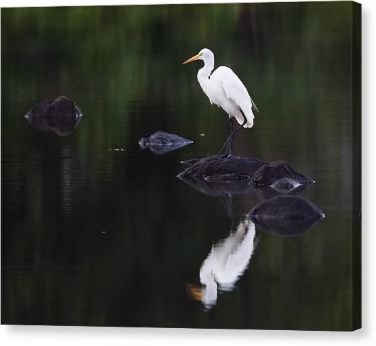 Great Egret Reflection Canvas Print