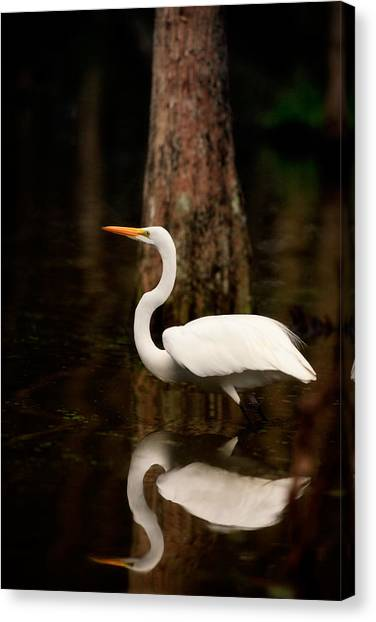 Great Cypress Canvas Print - Great Egret Reflection by Matt Suess