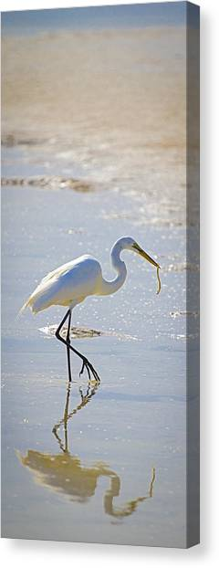 Great Egret With Prey Canvas Print