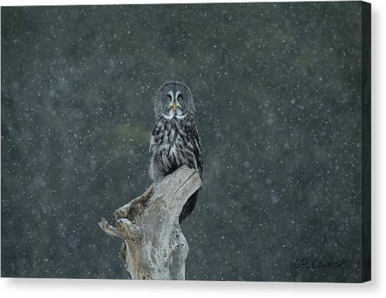 Great Gray Owl In Snowstorm Canvas Print