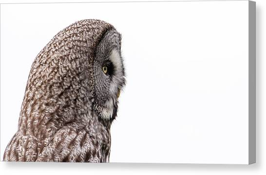 Great Grey's Profile On White Canvas Print