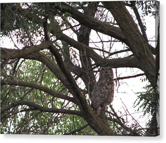 Great Horned  Canvas Print by Athena Ellis