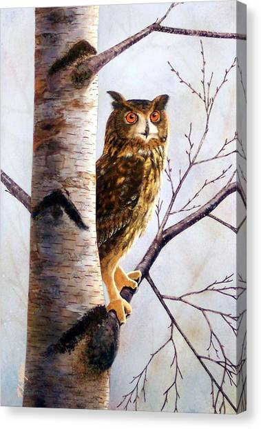 Great Horned Owl In Birch Canvas Print