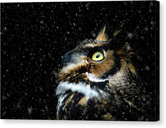 Great Horned Owl In The Snow Canvas Print