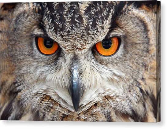 Canvas Print - Great Horned Owl by Pierre Leclerc Photography