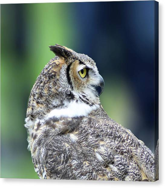 Great Horned Owl Profile Canvas Print