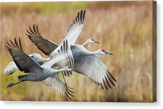 Great Migration  Canvas Print