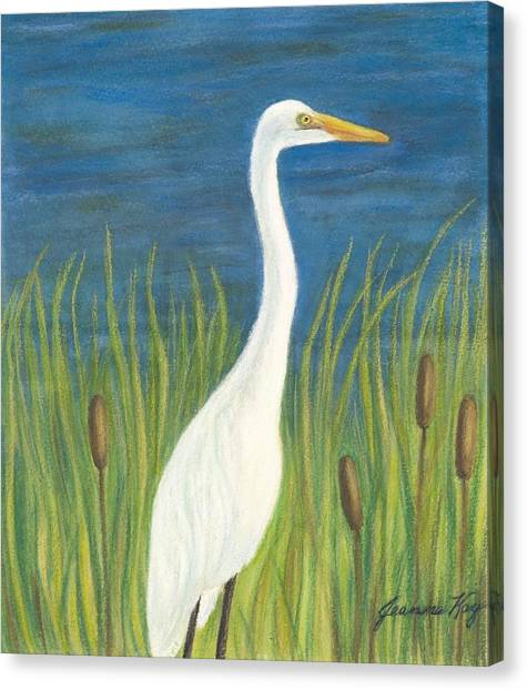 Great White Egret By Pond Canvas Print