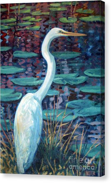 Everglades Canvas Print - Great White Egret by Donald Maier