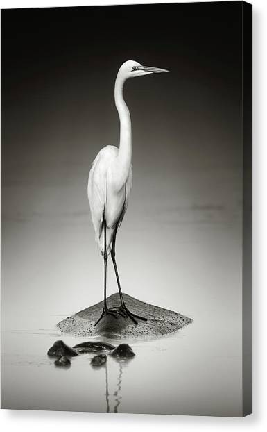 Egrets Canvas Print - Great White Egret On Hippo by Johan Swanepoel