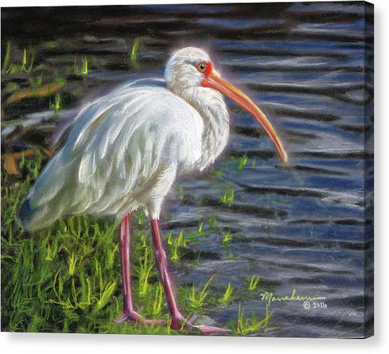 Okefenokee Canvas Print - Great White Ibis by Melissa Herrin