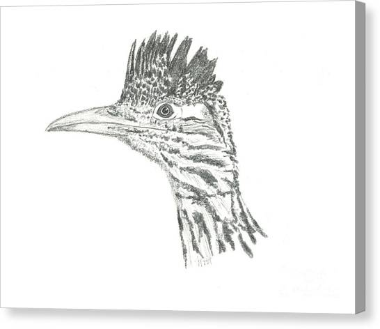Greater Roadrunner Canvas Print