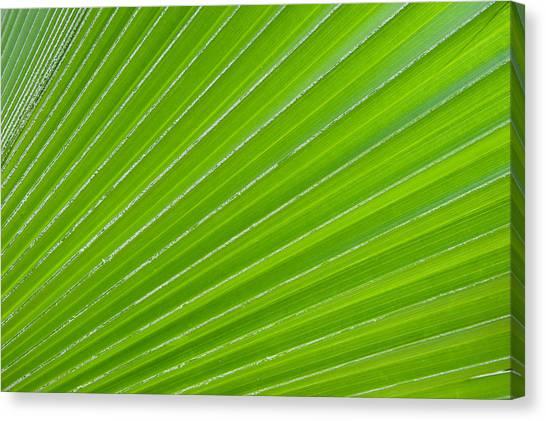 Green Abstract No. 1 Canvas Print