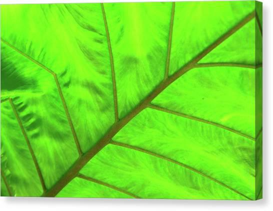 Green Abstract No. 5 Canvas Print