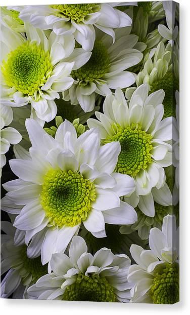 Pom-pom Canvas Print - Green And White Poms by Garry Gay