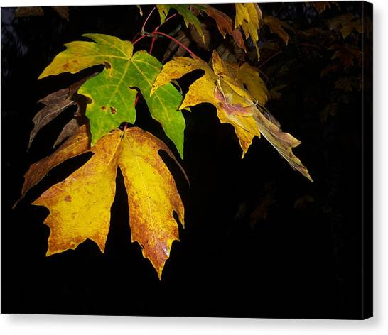 Green And Yellow Canvas Print by Ken Day