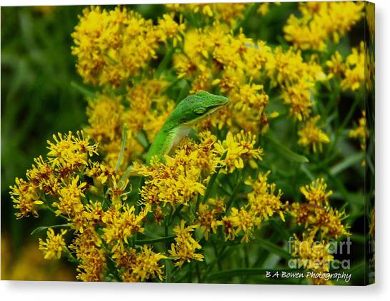 Green Anole Hiding In Golden Rod Canvas Print