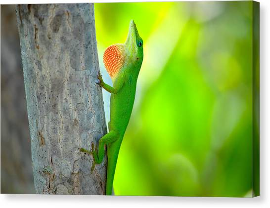 Green Anole Canvas Print by Rich Leighton