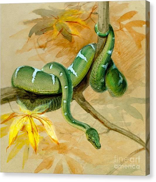 Boa Constrictors Canvas Print - Green Boa by Joseph Wolf