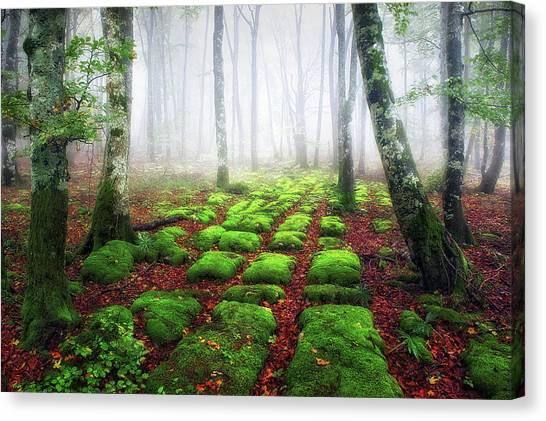 Green Brick Road Canvas Print
