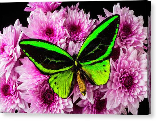 Pom-pom Canvas Print - Green Butterfly On Poms by Garry Gay