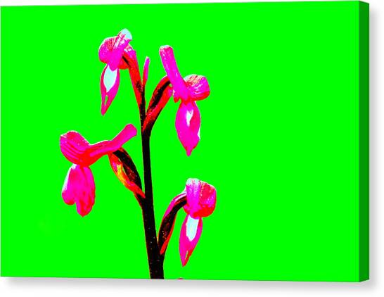 Green Champagne Orchid Canvas Print