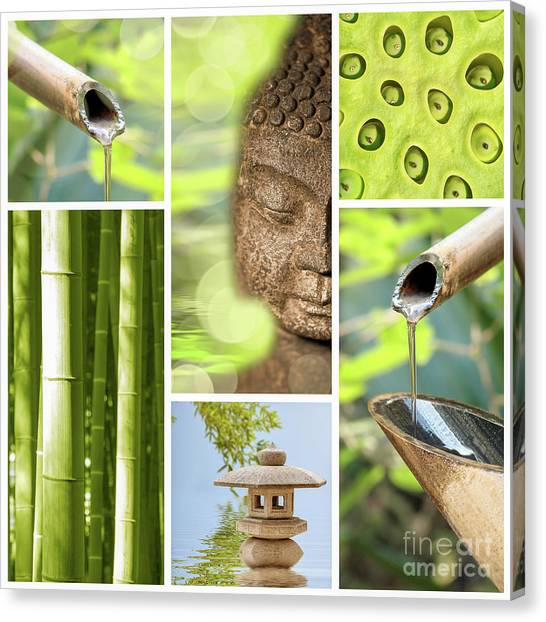 Bamboo Canvas Print - Green Collage by Delphimages Photo Creations
