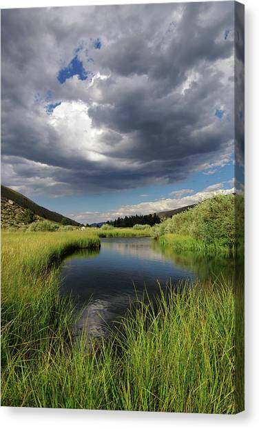 Green Creek 2 By Frank Hawkins Canvas Print