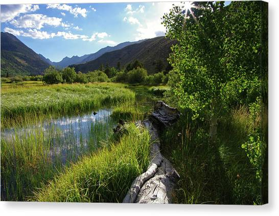 Green Creek Meadow Canvas Print