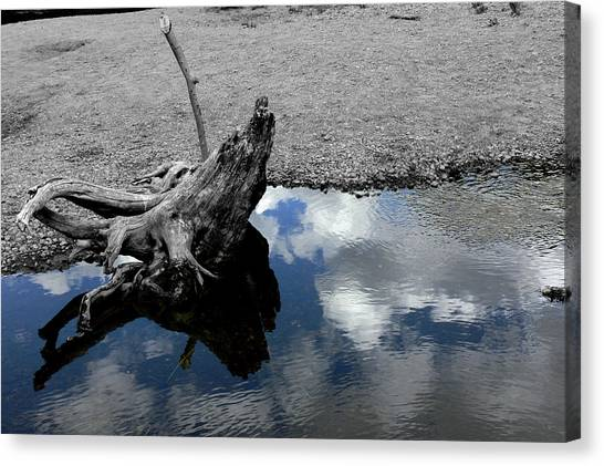 Green Creek Selective Color Canvas Print