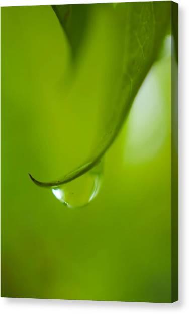 Green Drop Canvas Print