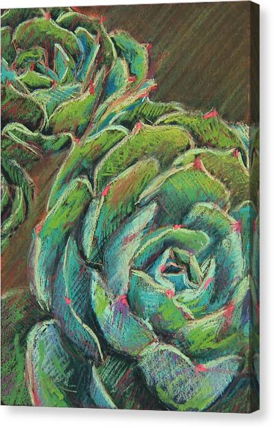 Succulent Canvas Print - Green Echeveria by Athena Mantle