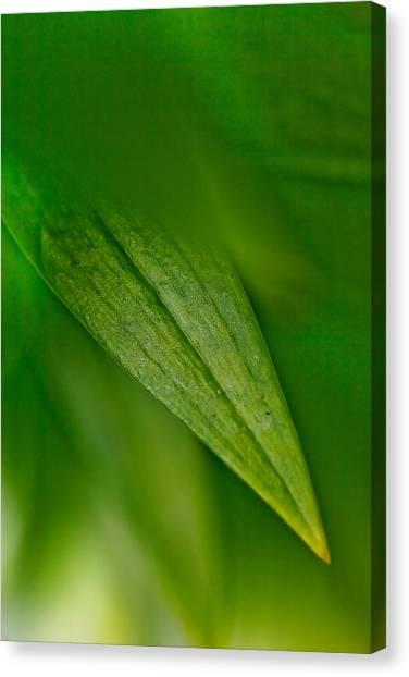 Rim Canvas Print - Green Edges by Az Jackson