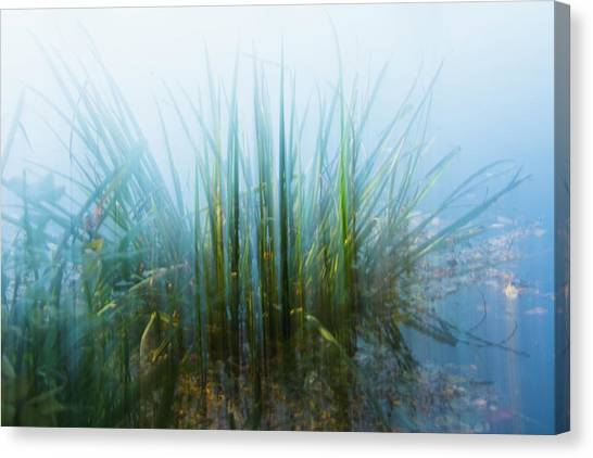 Morning At The Lake Canvas Print