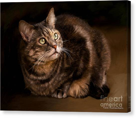 Green Eyed Kitty Canvas Print