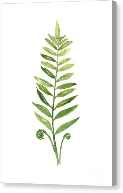Watercolor Canvas Print - Green Fern Watercolor Art Print Painting by Joanna Szmerdt