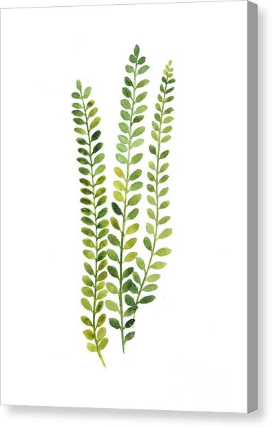 Flower Canvas Print - Green Fern Watercolor Minimalist Painting by Joanna Szmerdt