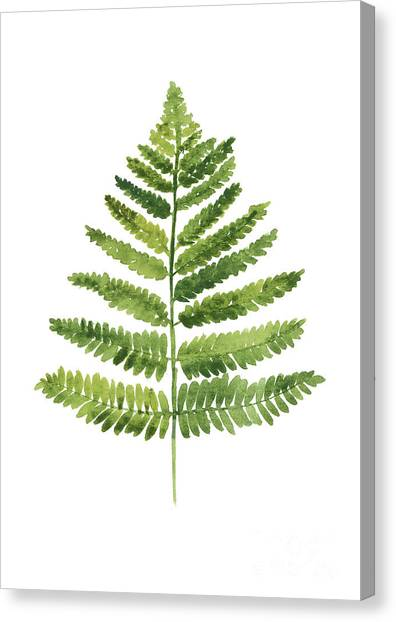 Botanical Canvas Print - Green Ferns Watercolor Poster by Joanna Szmerdt