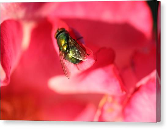 Green Fly Canvas Print by Kerry Reed