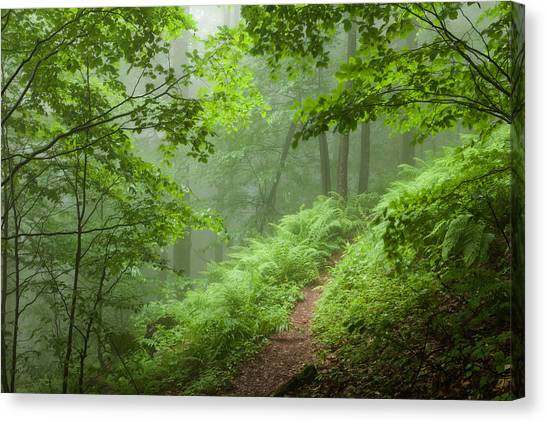 Forest Paths Canvas Print - Green Forest by Evgeni Dinev