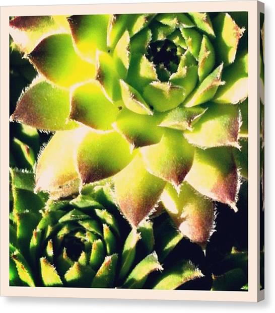 Fibonacci Canvas Print - Fibonacci In Nature by Heather Classen