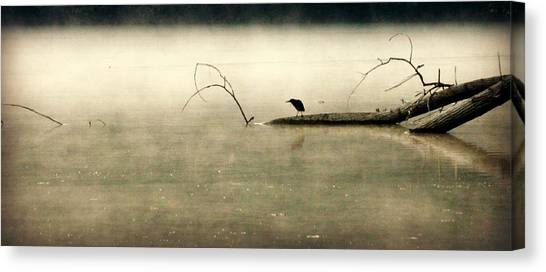 Green Heron In Dawn Mist Canvas Print