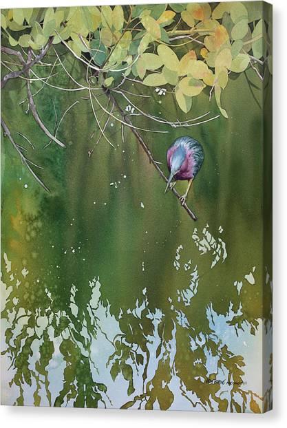Coexist Canvas Print - Green Heron, Red Mangrove by Kris Parins