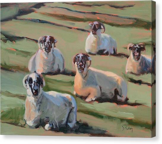 Green Hill Sheep At Rest Canvas Print