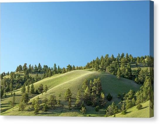 Contour Canvas Print - Green Hills by Todd Klassy