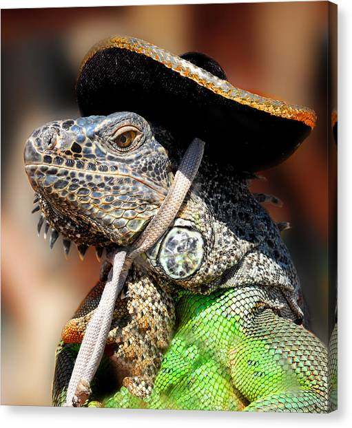 Iguanas Canvas Print - Green Iguana by Craig Incardone