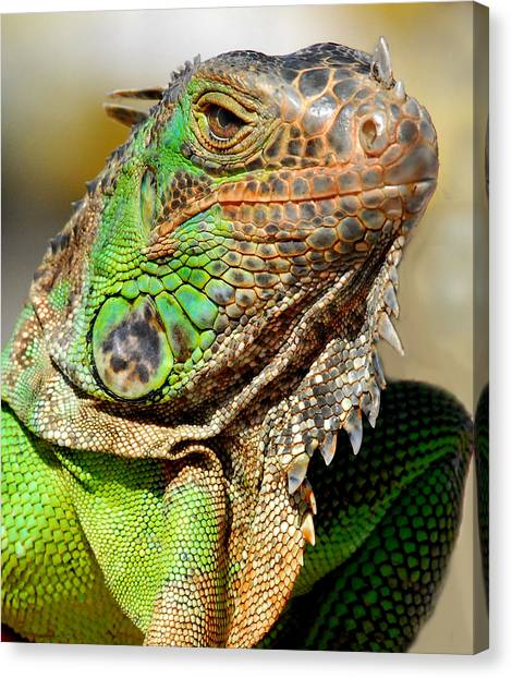 Green Iguana Series Canvas Print