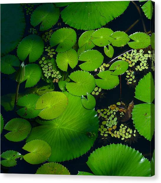 Green Islands Canvas Print
